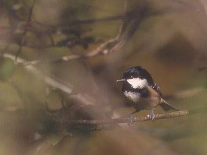 Dictionnaire des oiseaux - Signification des plumes d oiseaux ...