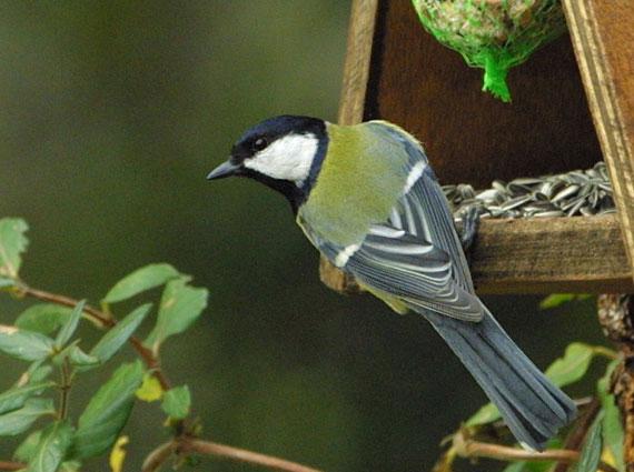 nourriture oiseau sauvage