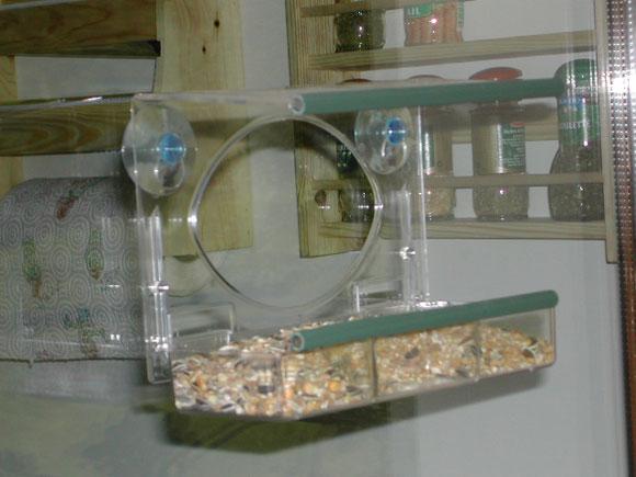 Les oiseaux et les vitres for Oiseau domestique interieur
